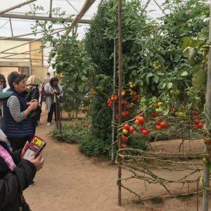 Groupe de personnes devant des plantations de fruits