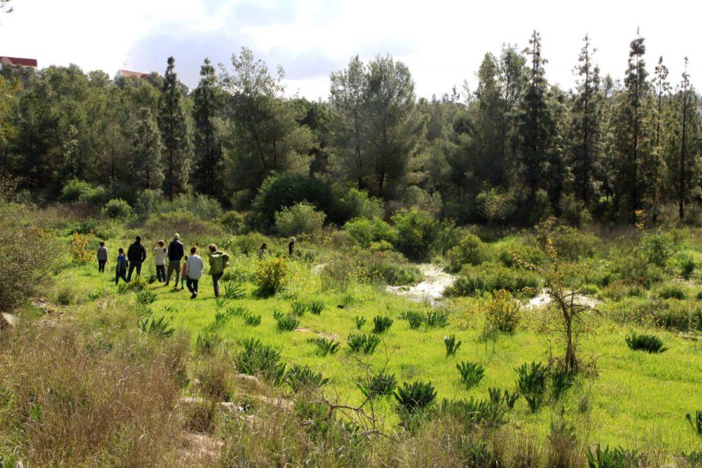 Une forêt en Israël du KKL