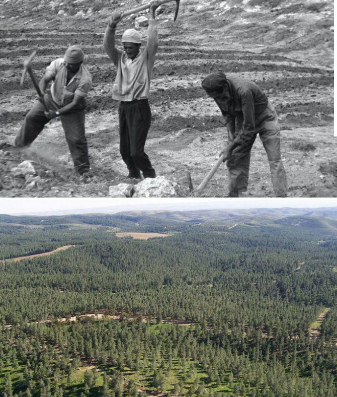 plantation d'arbres par le KKL