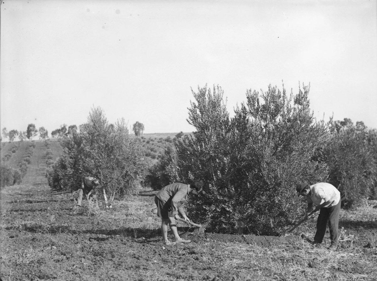 plantation d'arbres