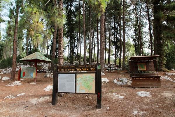 forêt d'Eshtaol