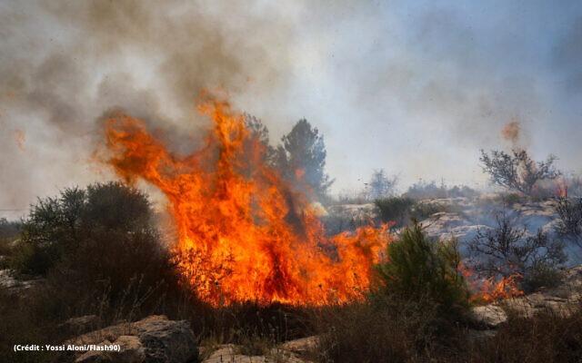 Forêts brulées 3