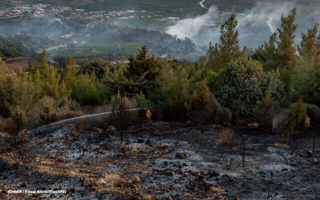 Forêts brulées 4