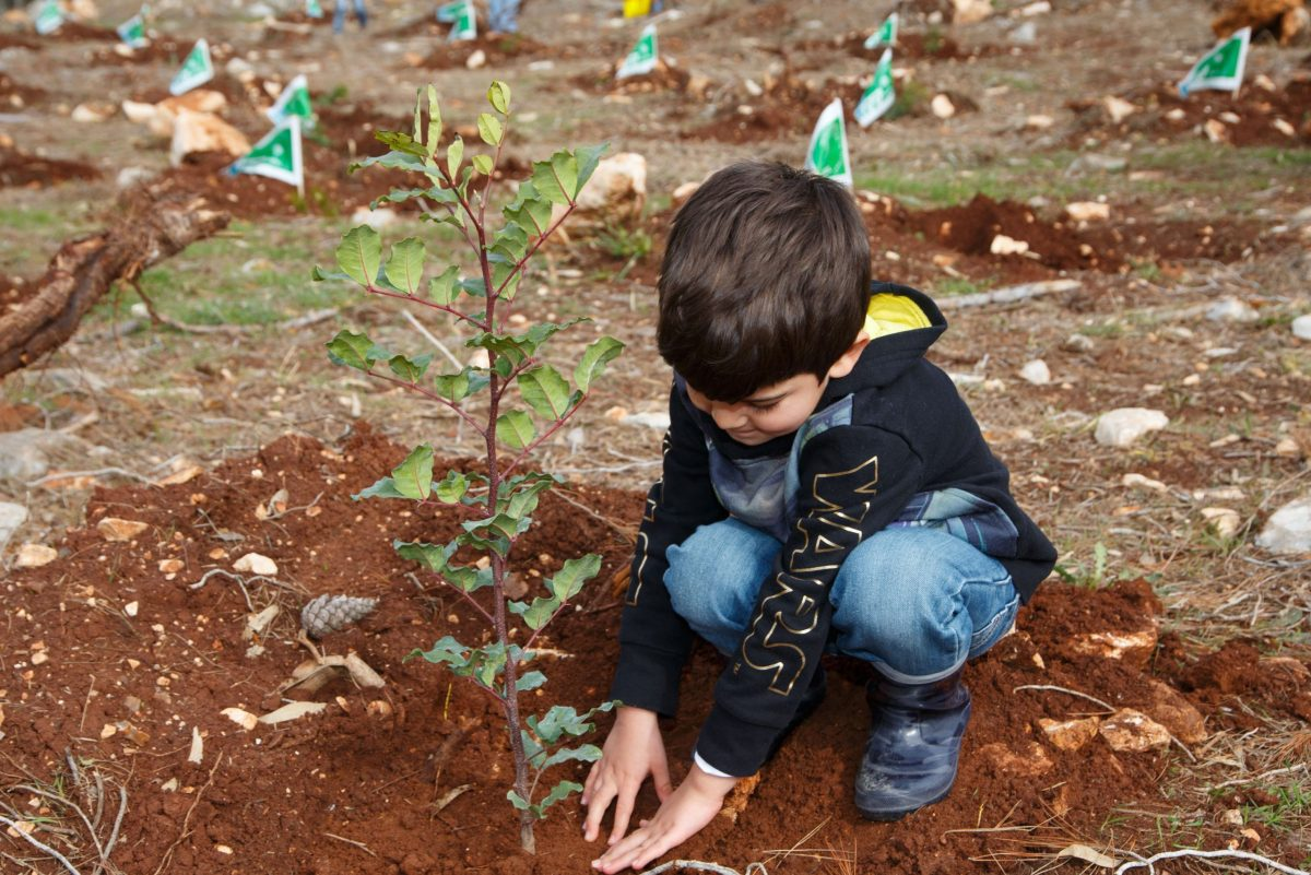 Lower Galilee, IDF orphans Forest, Ancho Gosh